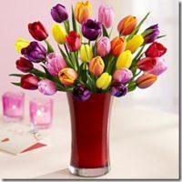 tulips_thumb.jpg