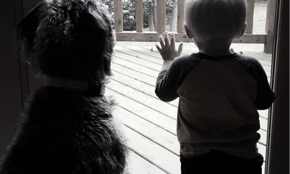 A Boy and His Dog: Teaching Responsibility to Toddlers