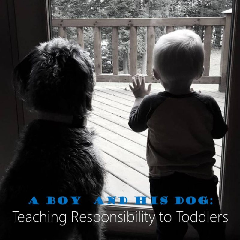a boy and his dog teaching responsibility to toddlers